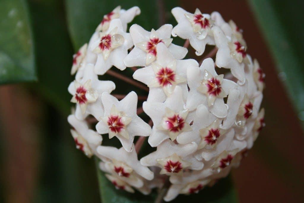 fiori di cera per la casa