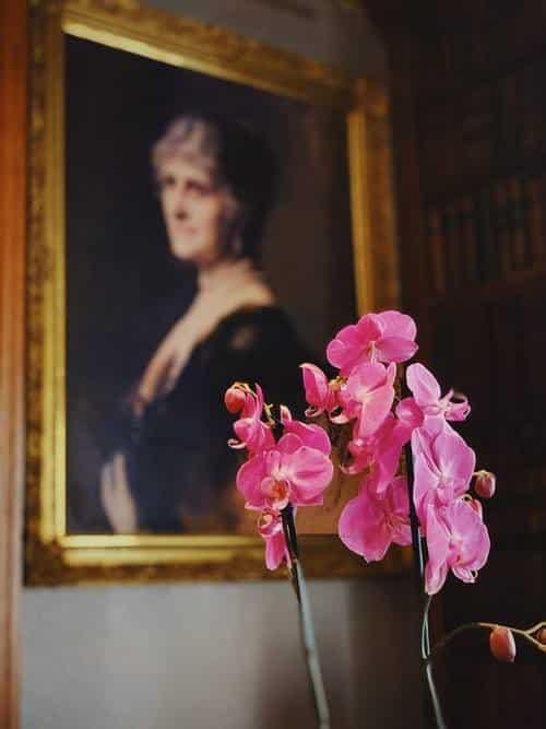 orchidea, pianta da appartamento