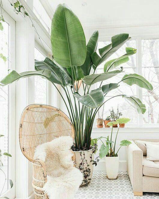 Piante Da Appartamento Design.Piante Da Appartamento Quali Scegliere Glamcasamagazine